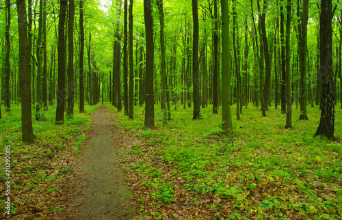 green forest in spring #202920115