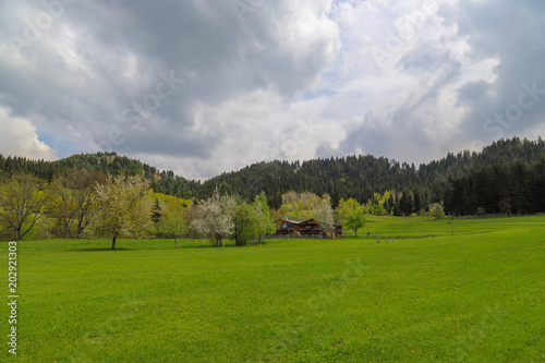 Foto op Canvas Donkergrijs Green meadows and trees Artvin savsat