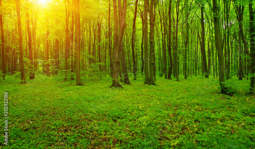 Forest  and sun rays #202922186