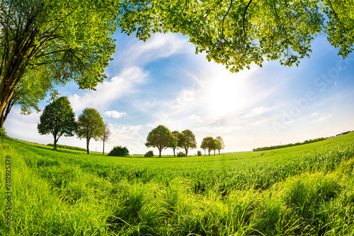 Naklejka Summer meadow surrounded by trees with blue sky and bright sun