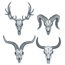 Animal Skulls Set. Vector Illustration Of Deer Skull, Goat Skull, Ram Skull And Bull Skull In Engraving Graphic, Ink Technique. Good For Posters, T-shirt Prints, Tattoo Design.