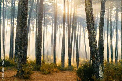 Fotografie, Obraz  Fabulous european forest