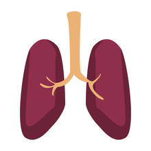 Human Lungs Isolated Vector Il...
