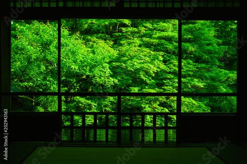 京都 瑠璃光院 2(青もみじ)