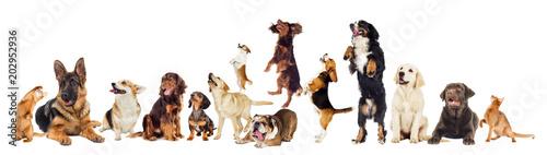 set of pets looks © Happy monkey