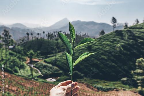 Keuken foto achterwand Khaki Teeplantage Fairtrade anbau, Bio Gesund aus der Natur Tee