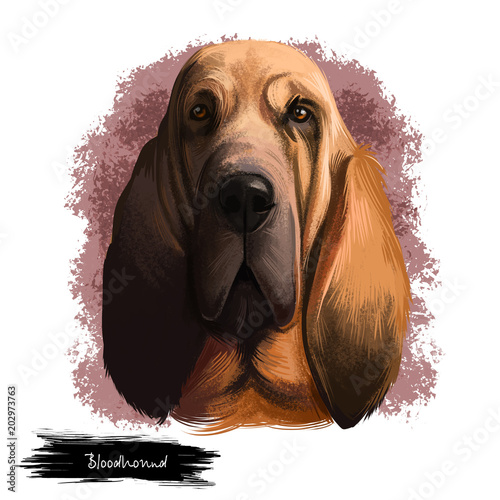 Tablou Canvas Bloodhound, Chien de Saint-Hubert, St