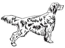Decorative Standing Portrait Of English Setter Vector Illustration
