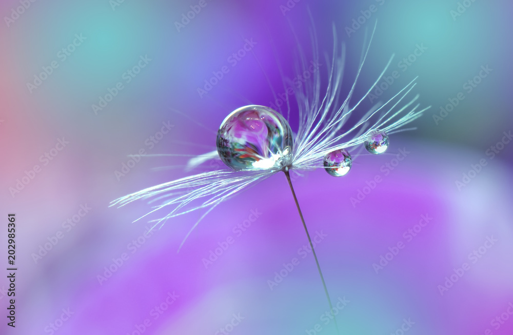 Fototapeta Abstract macro photo.Dandelion and water drops.Artistic Background for desktop. Flowers  with pastel tones.Tranquil abstract closeup art photography.Print for Wallpaper.Floral fantasy design.