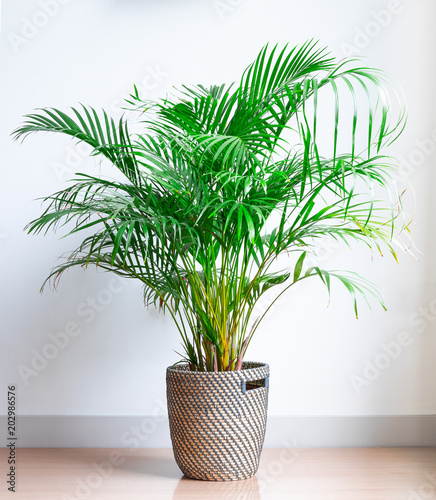 Photo bright living room with houseplant on the floor in a wicker basket