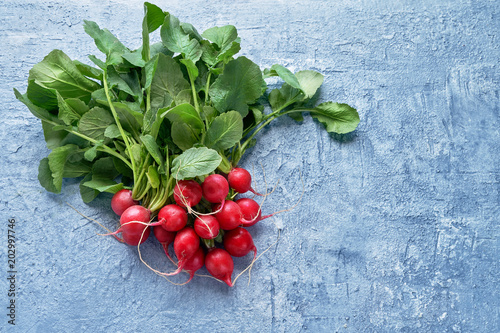 Organic food. Red radish bunch in the on bright blue background. Top view, copy space. Healthy food background.