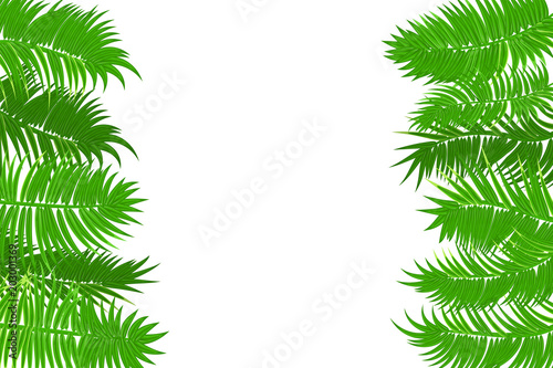 Web Summer Jungle Frame Banner Green Palm Leaves Template Isolated White Background Vector Abstract Ilration Realistic Picture Tropical