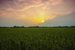 landscape paddy field at sunset in Thailand