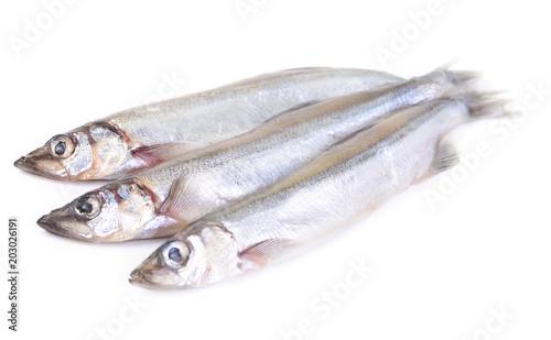 Tuinposter Vis Fish capelin