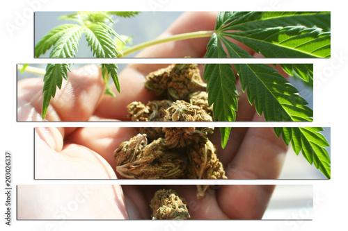 Photo  Medical Marijuana Art With Bud In Hand
