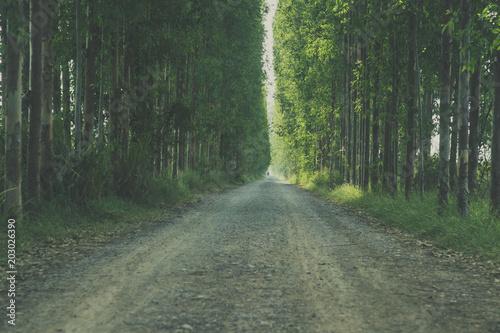 Leśna ścieżka tworząca tunel