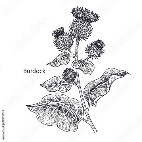 Medical plant Burdock. Canvas Print