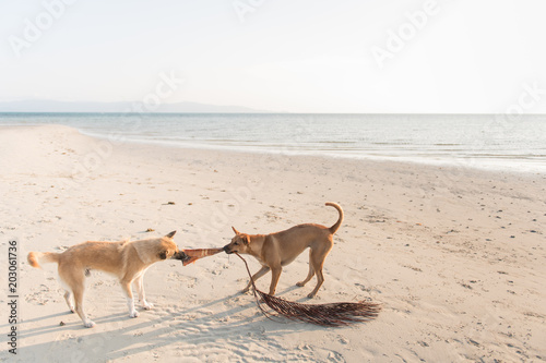 Two dogs on beach at seaside