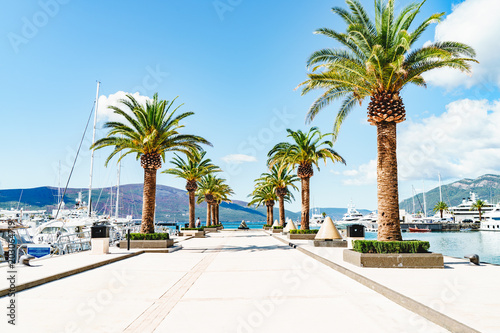Obraz palm trees and yachts on a sunny day in the marina in Porto Montenegro, Tivat - fototapety do salonu