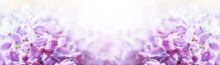 Romantic Floral Background With Purple Or Violet Lilac Flowers