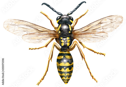 Wasp watercolor illustration, isolated on white Tapéta, Fotótapéta