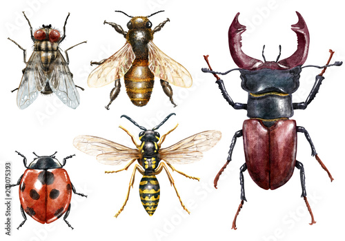 Insect collection watercolor illustration, isolated on white
