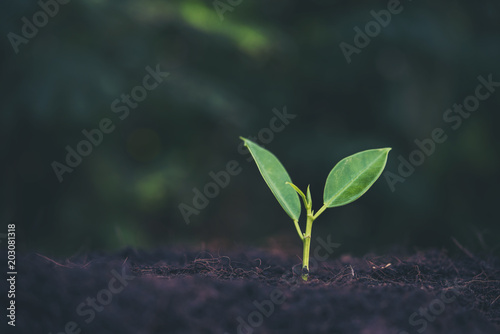In de dag Planten Green sprout growing from seed