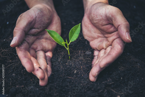 Spoed Foto op Canvas Planten two hands holding and caring a young green plant with warm sunlight