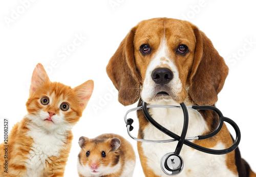 lekarz-weterynarii-pies-i-kot