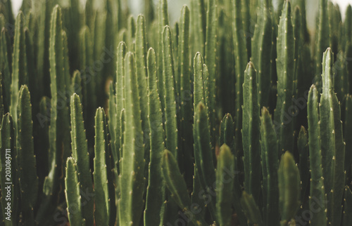 green cactus background mexican plant fashion Poster