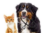 Fototapeta Zwierzęta - dog veterinarian and cat