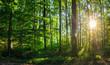 Wald Laub Grün mit Sonne