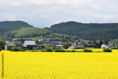 Spoed Foto op Canvas Geel Blick über fElder auf Wehr, Eifel 05/18