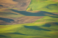 Scenic View Of Palouse Hills D...