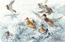 A Flock Of Ducks In The Sea Splatter Watercolor Background