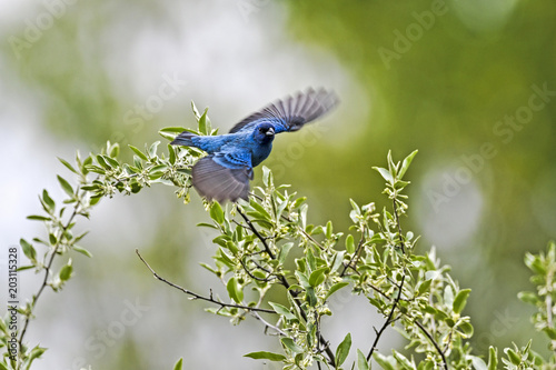 In de dag Vogel Blue bird flying over plants