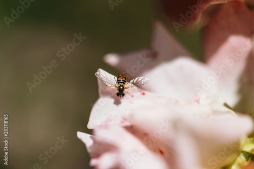 High angle close-up of insect pollinating on flower