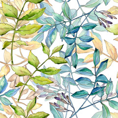 Fototapeta Do biura Ash leaves in a watercolor style pattern. Aquarelle leaf for background, texture, wrapper pattern, frame or border.