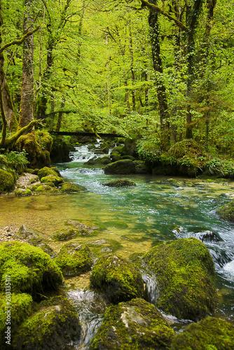 Staande foto Rivier Rivière en forêt