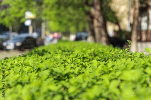 Aluminium Prints Garden green summer grass.