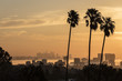 Silhouette palm trees in city against orange sky during sunset
