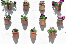 Flower Pots And White Wall, Ol...