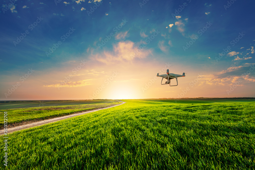 Fototapety, obrazy: drone quad copter on green corn field