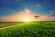 canvas print picture - drone quad copter on green corn field