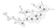 Cute Hand Drawn Isolated Sakura Branch Set 1.