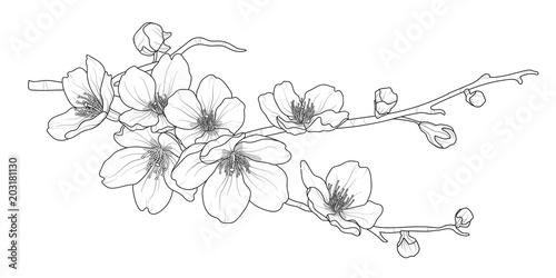 Śliczna ręka rysujący odosobniona Sakura gałąź ustawia 2.