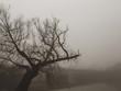 Latvia The surroundings of the bridge bridge in an early, foggy morning