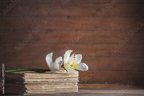 Acrylic Prints Bird-of-paradise flower White orchid flower and old books on wooden table and background