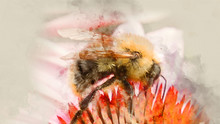 Bumblebee Pollinating Flower Close Up. Watercolor Background