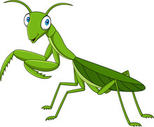 Cartoon Green Mantis